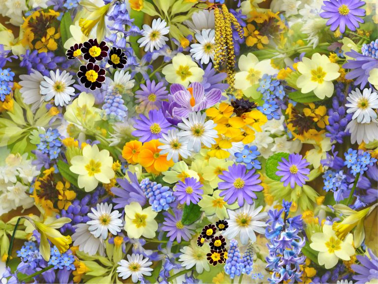 Top 5 Most Popular Flowers In The World