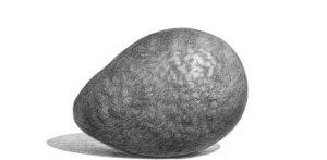 Avocado drawing