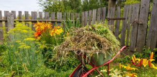 3 Safe Ways To Get Rid Of Yard Waste