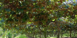 Kiwi Farming